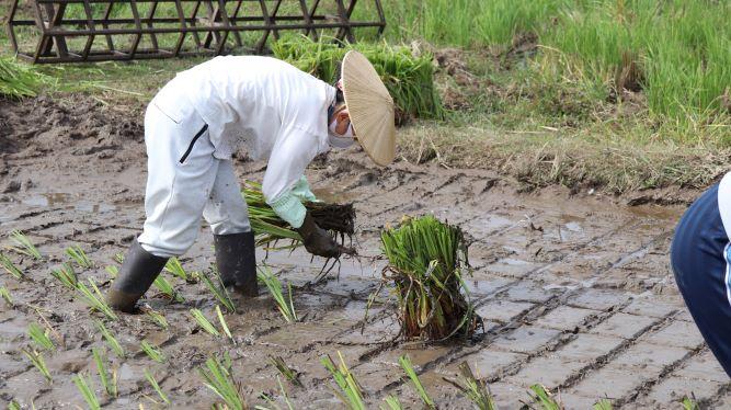菅の田植え